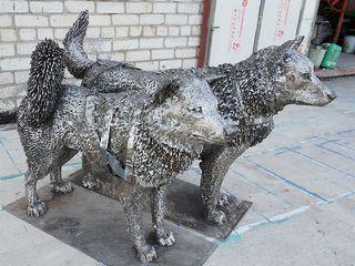 Чукотские ездовые собаки