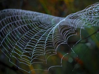 Spider web  pictures